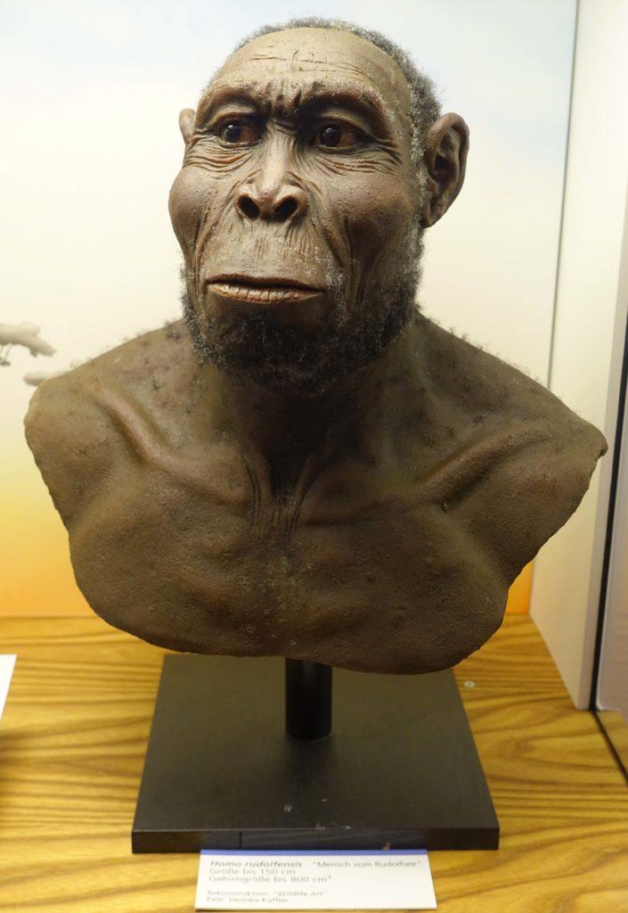 Buste d'Homo Rudolfensis