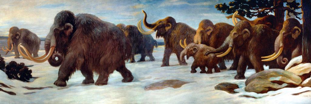 Colonie de Mammouths laineux