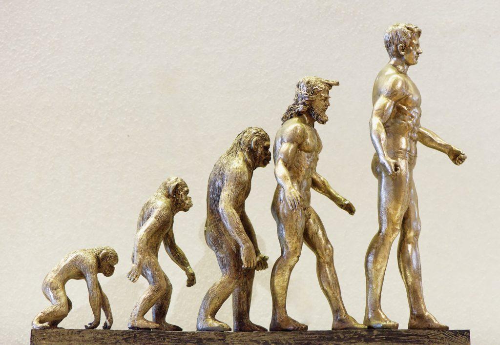 Lignée évolutive de l'Homme