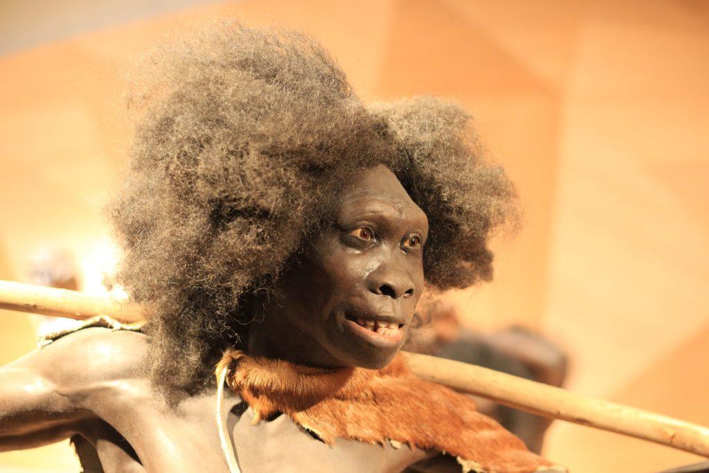 Reconstitution d'un Homme de Neandertal